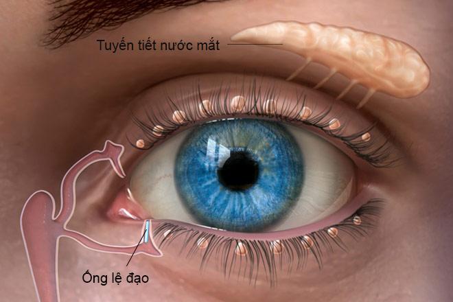 Khô mắt là tình trạng thiếu nước mắt để bôi trơn nhãn cầu